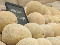 Cantaloupe Royalty Free Stock Photo