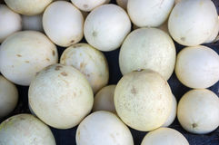Cantaloupe fruit for sale Stock Photography