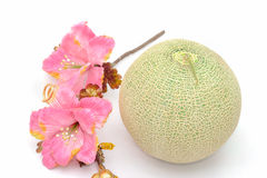 Cantaloupe melon with flower on white background Royalty Free Stock Images