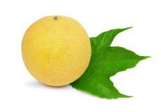Cantaloupe melon with green leaf Stock Photo