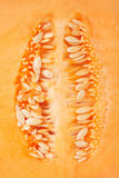 Cantaloupe melon seeds macro texture background Royalty Free Stock Images