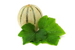 Cantaloupe melone Stock Image
