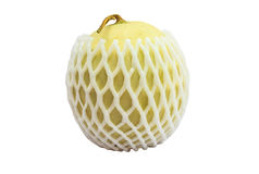 Cantaloupe melonpacked with protective foam net isolate white ba Stock Images
