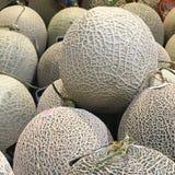 Cantaloupe melons closeup royalty free stock image
