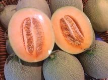 Cantaloupe melons Stock Image