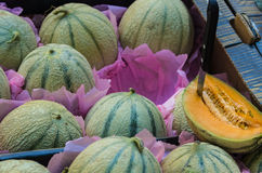 Cantaloupe melons Stock Photography