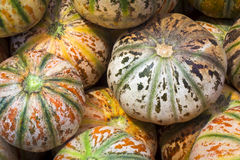 Cantaloupe (Musk melon) Stock Photography