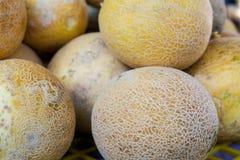 Cantaloupes in the market Stock Photography