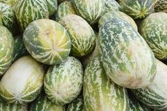 Cantaloupmelonfrukt Fotografering för Bildbyråer