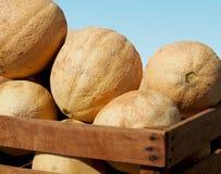 Cantaloups dans une caisse Images stock
