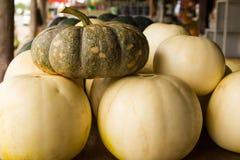 Cantalupo das abóboras Imagem de Stock Royalty Free