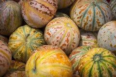 Cantalupo (melón): Un melón de Charentais es un tipo de melón del cantalupo vendido en el mercado de la India Imagen de archivo