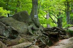cante de trailn en árbol Foto de archivo