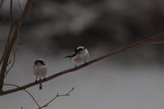Cante los pájaros en invierno Imágenes de archivo libres de regalías