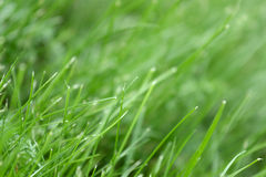 Canted green grass close-up. May be used as background Stock Photo