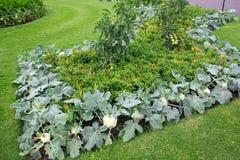 Canteiro de flores belamente decorado dos vegetais em um parque público em Londres fotos de stock