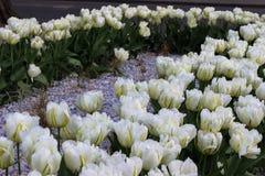 Canteiro de flores bonito incrível fotografia de stock royalty free