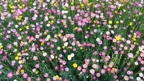 Canteiro de flores colorido em Sydney Botanical Garden Fotos de Stock Royalty Free