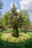 Canteiro de flores com as tulipas no jardim Foto de Stock Royalty Free