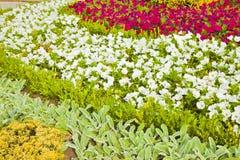 Canteiro de flores curado finamente com as flores brancas e cor-de-rosa Fotos de Stock