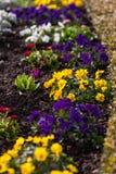 Canteiro de flores da mola Foto de Stock Royalty Free