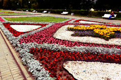 Canteiro de flores de florescência no parque do verão da cidade Fotografia de Stock Royalty Free