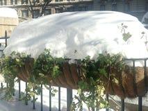Canteiro de flores de suspensão em Herald Square na neve Foto de Stock