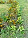 Canteiro de flores em um parque Imagens de Stock