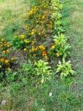 Canteiro de flores em um parque Imagem de Stock Royalty Free