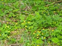 Canteiro de flores em um parque Fotografia de Stock
