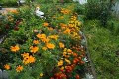 Canteiro de flores de florescência perto da casa em agosto fotos de stock