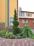 Canteiro de flores futurista com um arbusto espiral perto da construção com uma cópia patriótica Fotografia de Stock Royalty Free