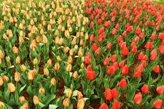 Canteiro de flores no jardim botânico Imagens de Stock Royalty Free