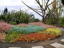 Canteiro de flores no jardim botânico em Funchal de Madeira Fotografia de Stock Royalty Free