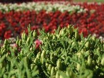 Canteiros de flores do fragmento Imagens de Stock Royalty Free