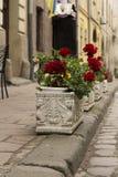 Canteiros de flores na cidade Foto de Stock