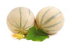 Cantelope melon Stock Photos