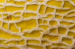 Cantelope Skin Detail Stock Image