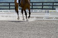 Canter In the Dust. Bottom half of horse pictured going through moves in a dressage competition royalty free stock image