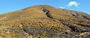 Canterbury High Country carpeted in Native plants, shrubs and tu Stock Images