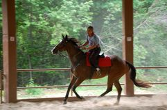 Horse Riding. A senior man rides a horse in the arena Royalty Free Stock Photography