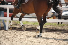Cantering horse legs close up Royalty Free Stock Photo