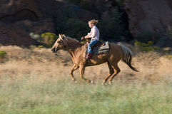 Cantering into the light Royalty Free Stock Image