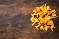 Cantharellus cibarius, chanterelle mushrooms Stock Photography