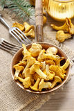 Cantharellus cibarius, commonly known as the chanterelle Royalty Free Stock Images