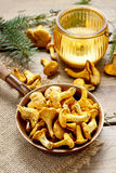 Cantharellus cibarius, commonly known as the chanterelle Royalty Free Stock Photo