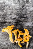 Cantharellus cibarius, commonly known as the chanterelle, golden Stock Image