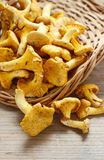 Cantharellus cibarius, commonly known as the chanterelle, Royalty Free Stock Images