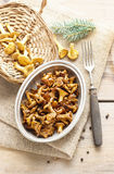 Cantharellus cibarius, commonly known as the chanterelle Royalty Free Stock Photos