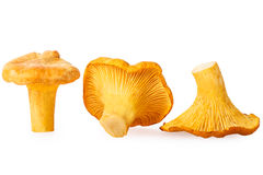 Cantharellus cibarius isolated on white background Stock Images